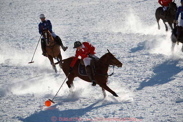 Winterpolo pressphoto horses player ballaction on snow St.Moritz